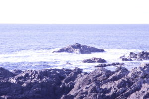 View from a bench along the Wild Pacific Trail